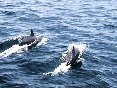 兒童節去哪玩? 來龜山島賞鯨追海豚